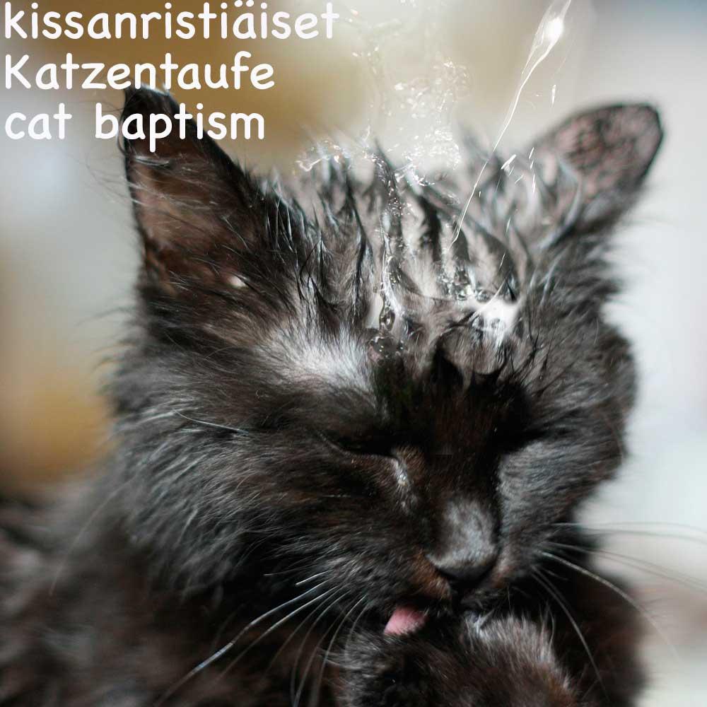 kissanristiaeiset