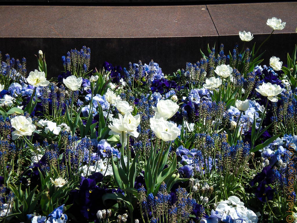 Blumen am Zar Aleksanteri II Denkmal