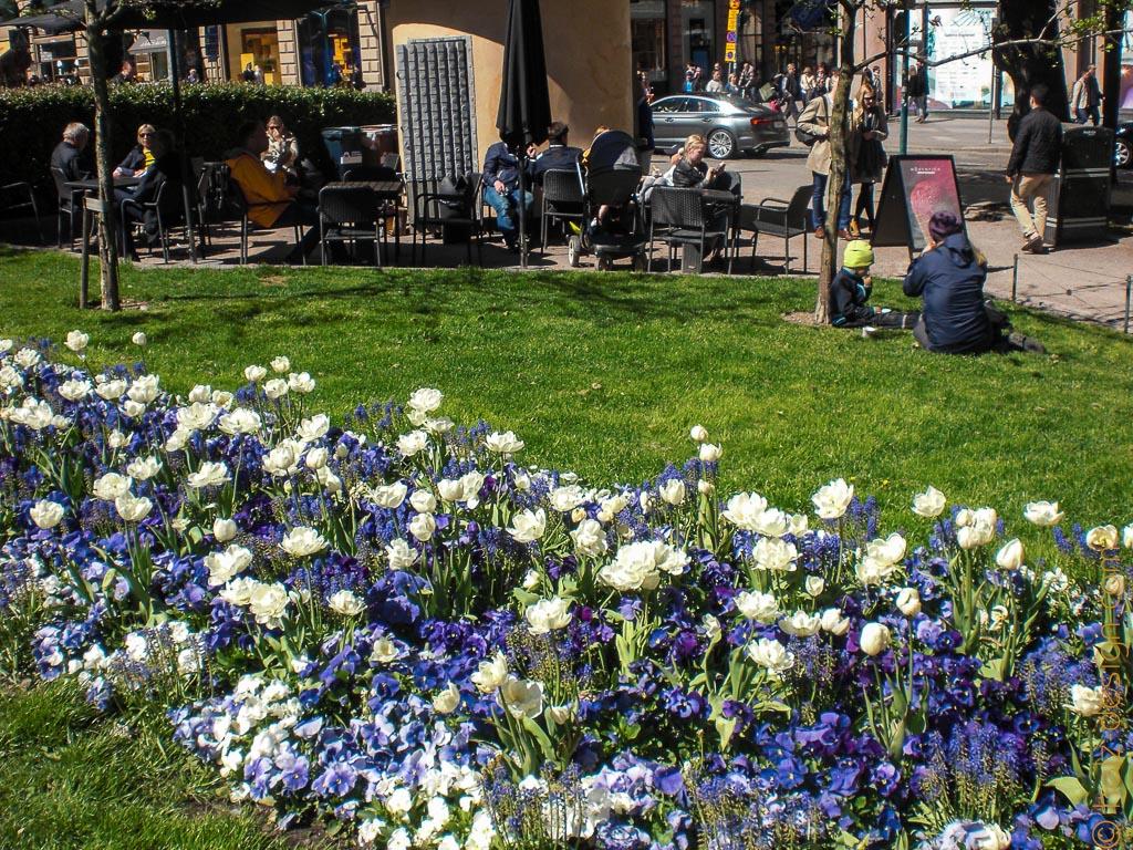 Blau-weiße Blumenbeete