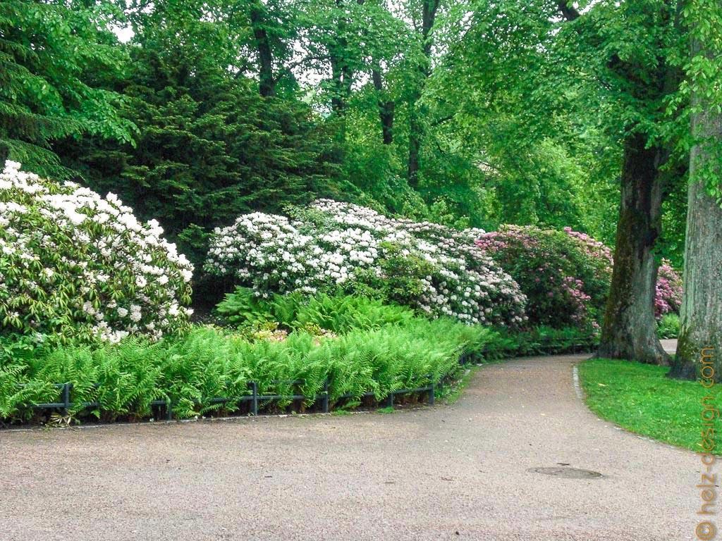 Rhododendronhecke