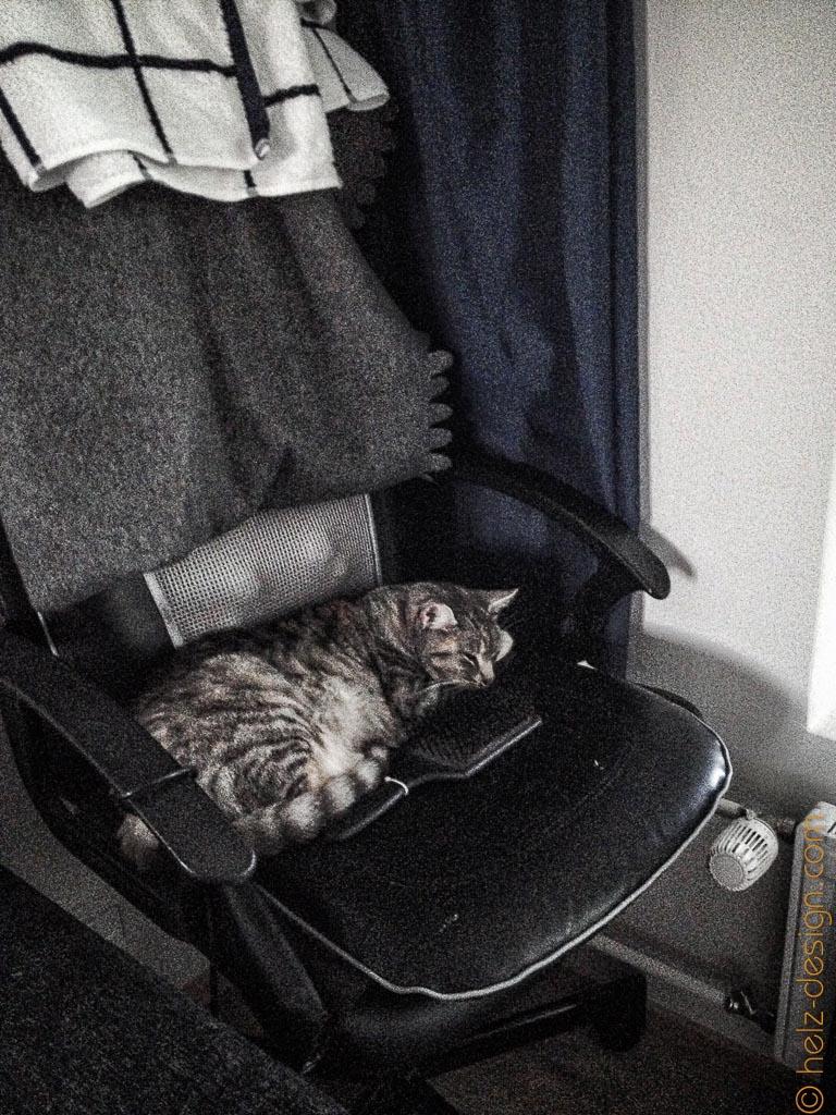 Tikkru schläft nahe bei mir