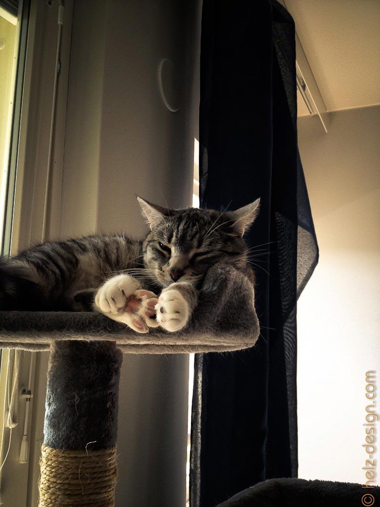 kuschelige Katze