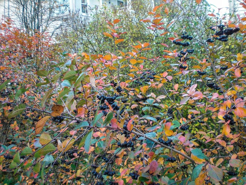 Herbststimmung in Toivola