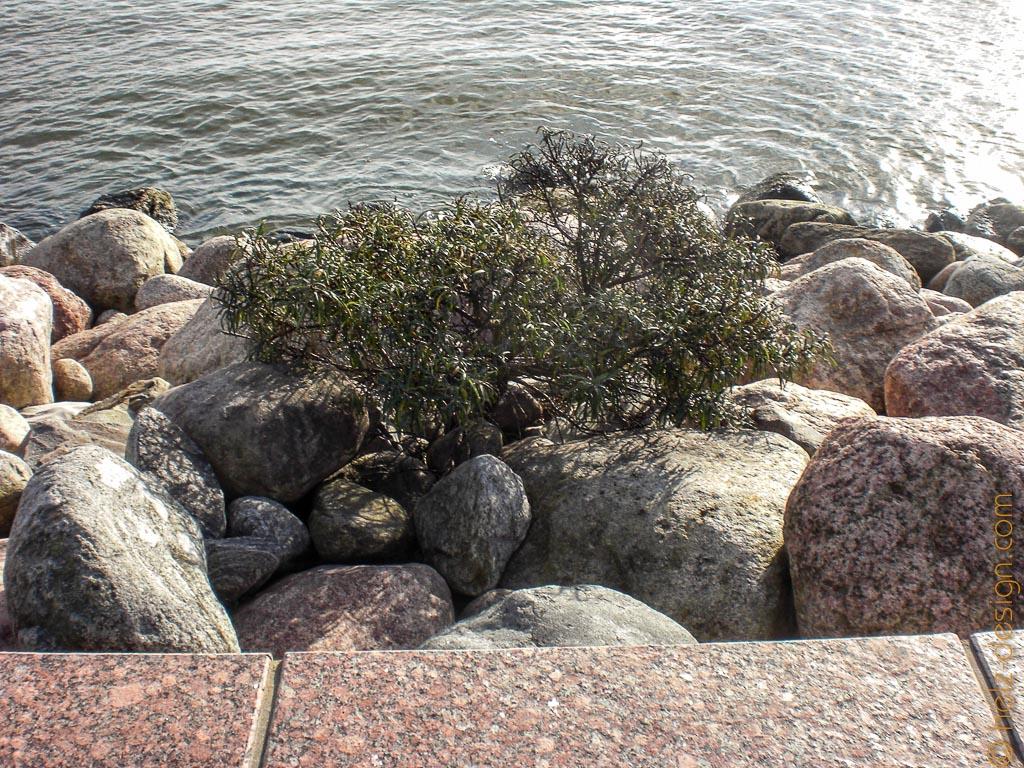 Ein tapferer kleiner Baum