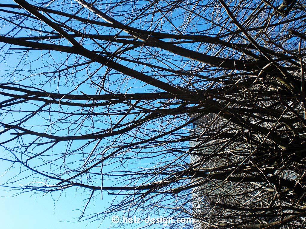 Ein Baum im Telakkapuistikko