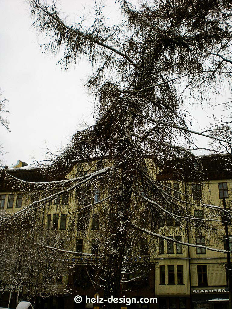 Geile Baumstrukturen