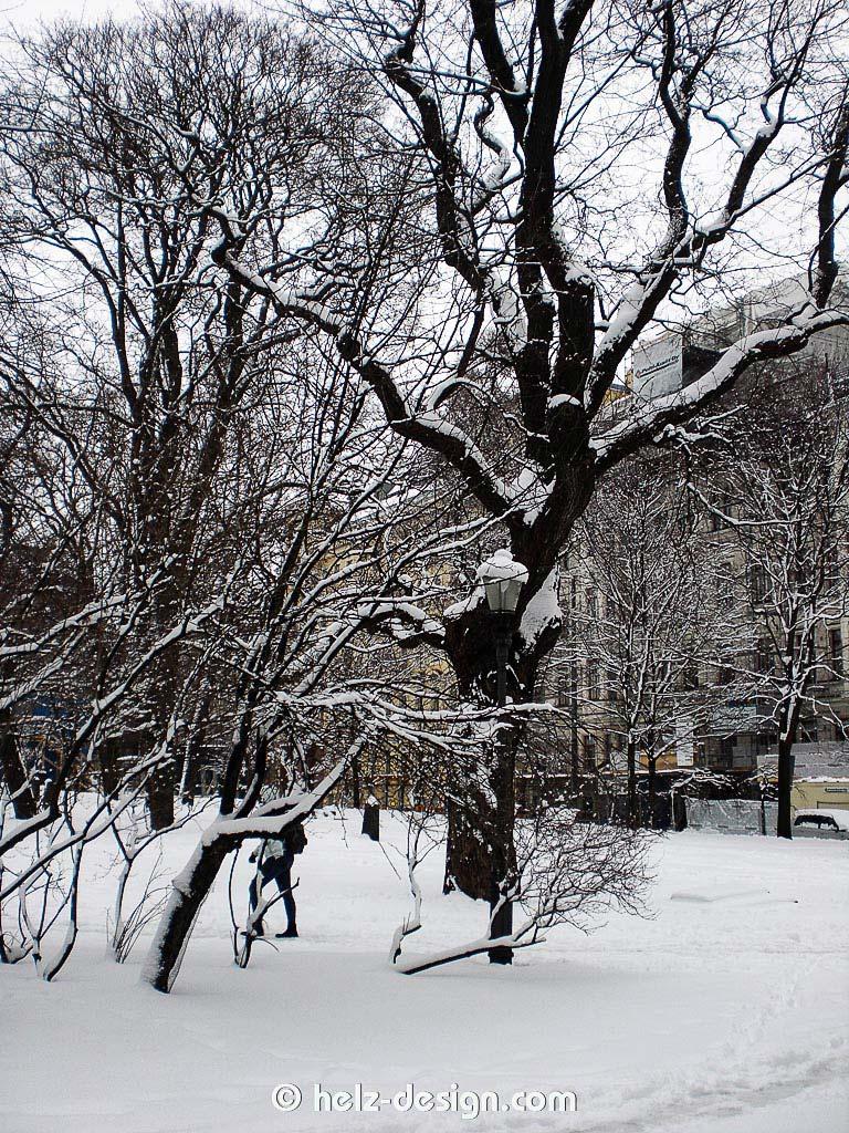 Hammerbäume