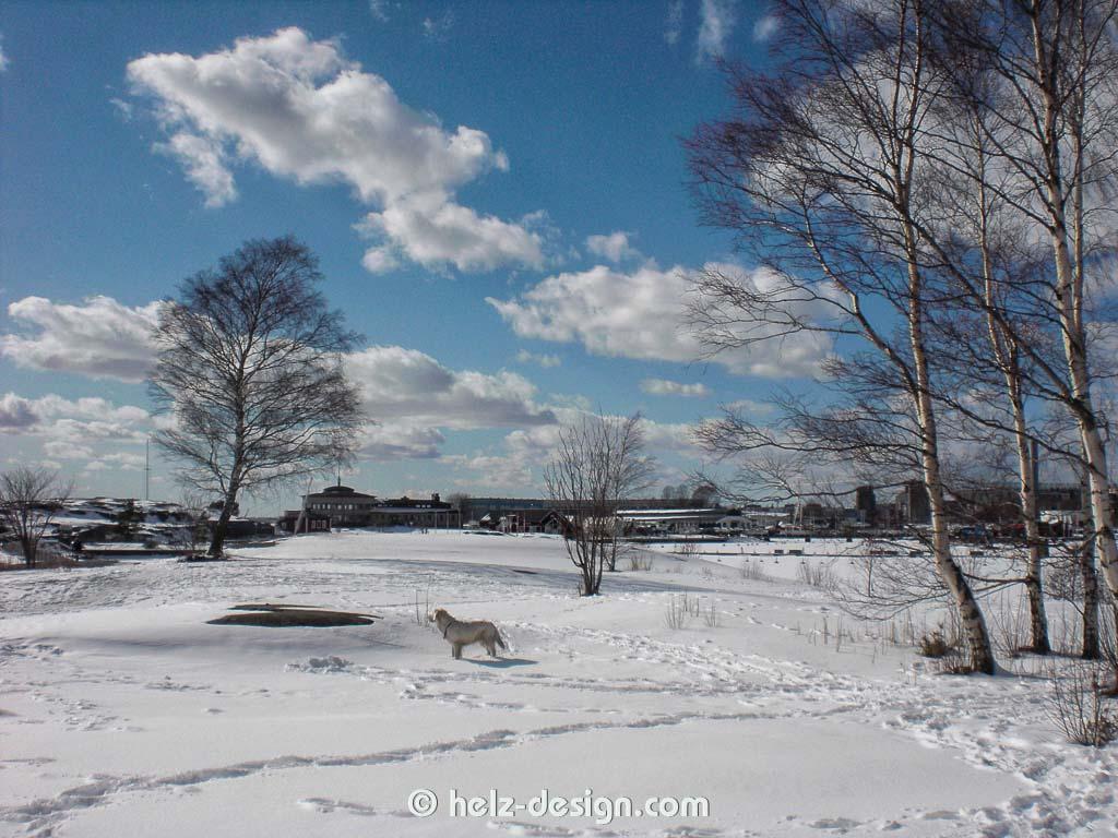 weißer Hund im weißen Schnee …valkoinen koira valkoisessa lumessa