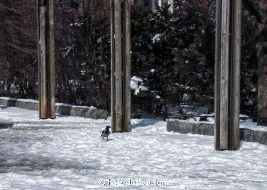 Ein Rabe bewacht den Eingang zum Kaivopuisto