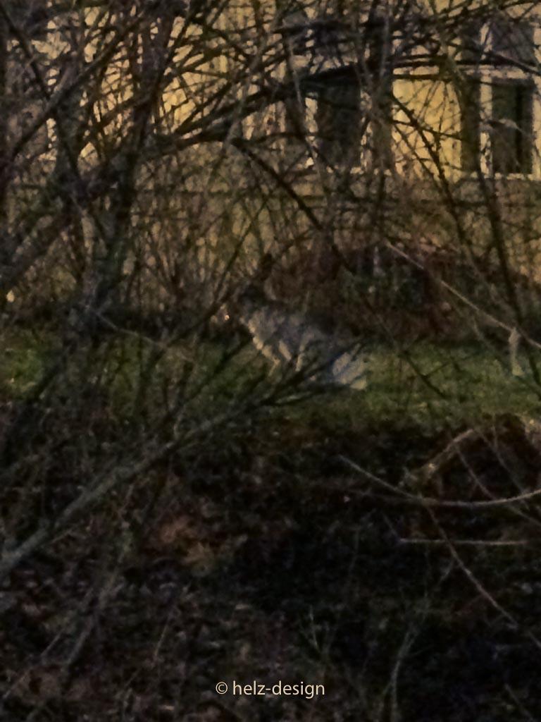 Ein Hase versteckt sich hinter den Büschen