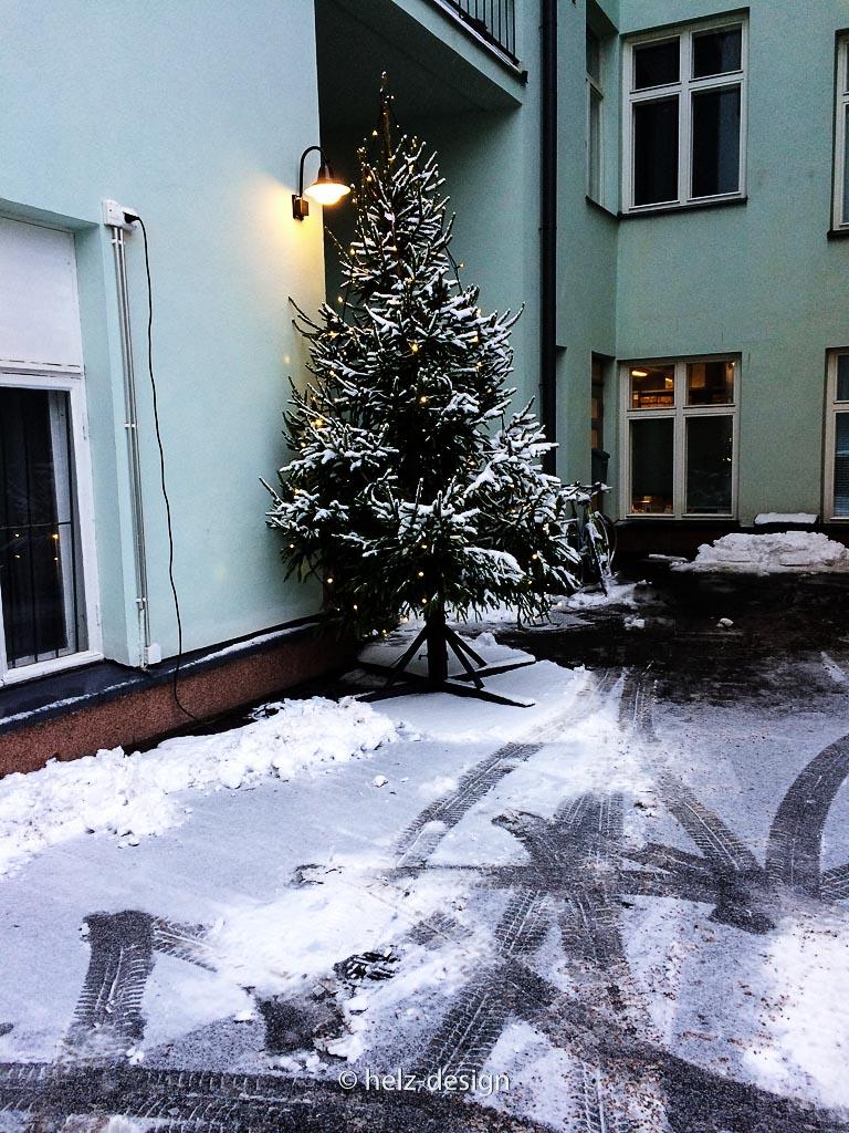 Baum in Hinterhof