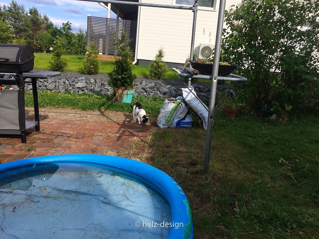 Söpö, die Katze, schleicht an den Pool