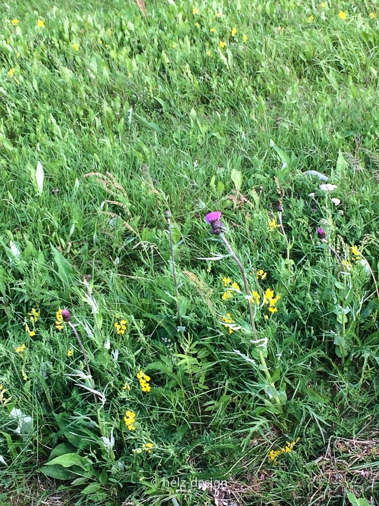 Blumenwiese …ob ich die fünf verschiedenen Blüten sammeln soll und unter mein Kopkissen legen? Alter finnischer Juhannusbrauch und dann vom Zukünftigen träumen?